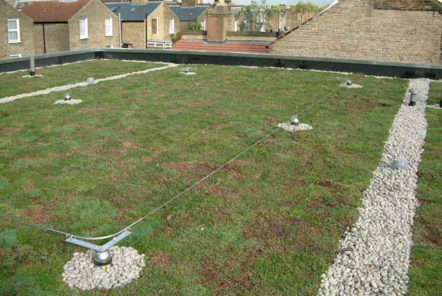 Buy Grufekit Green Living Sedum Roofs At Roofinglines 4