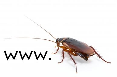 www.cockroach